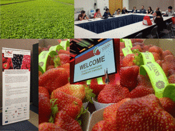 Impressions from International Strawberry Symposium 2016